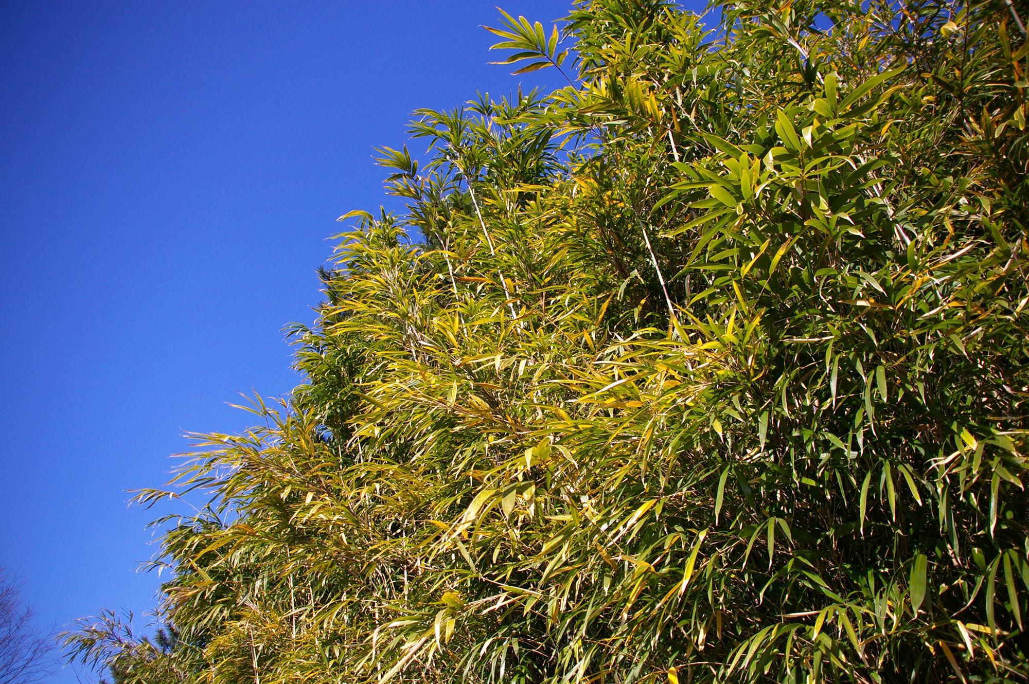 藪と青空のフリー写真素材