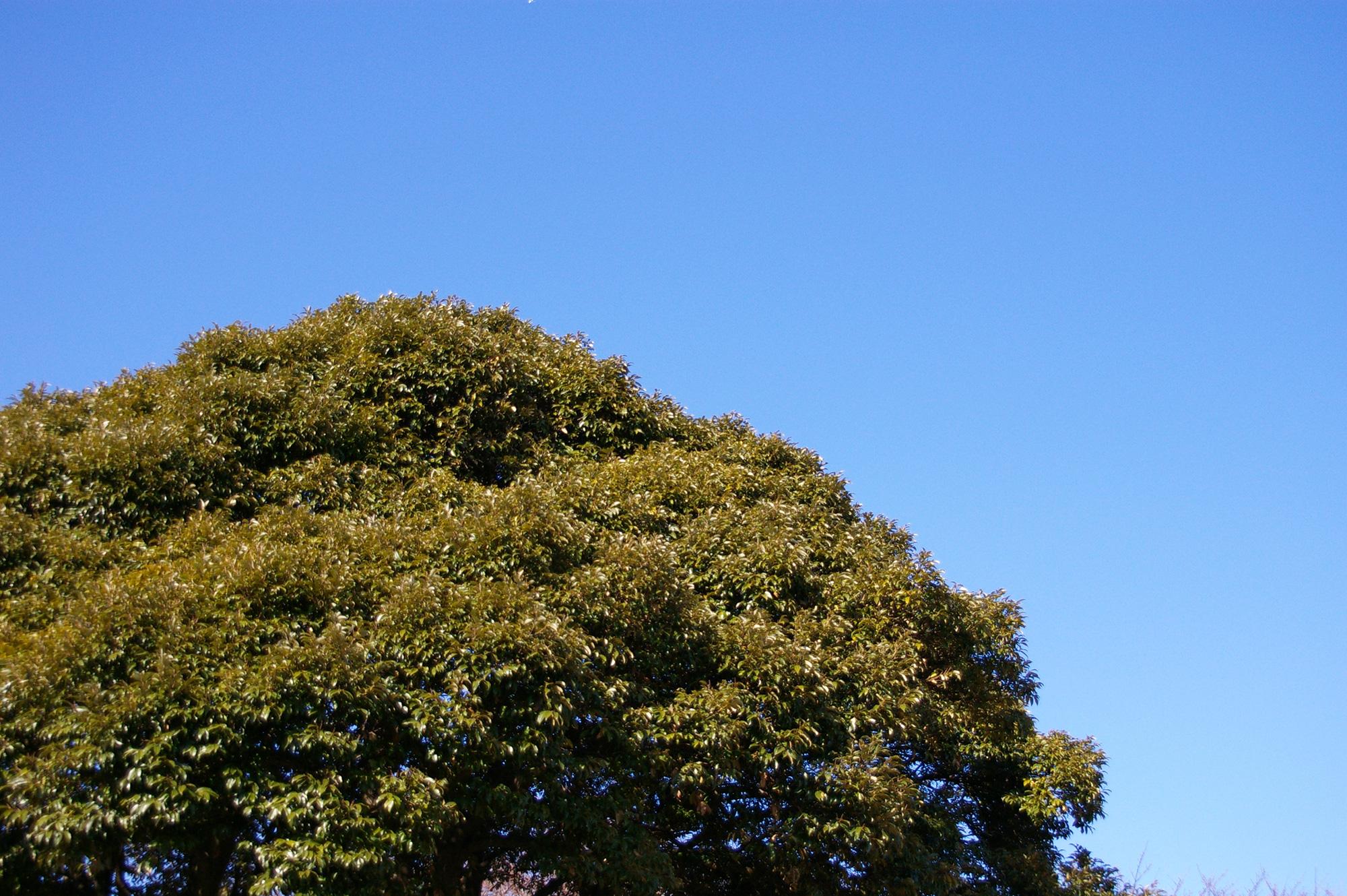 こんもりとした木の無料写真素材