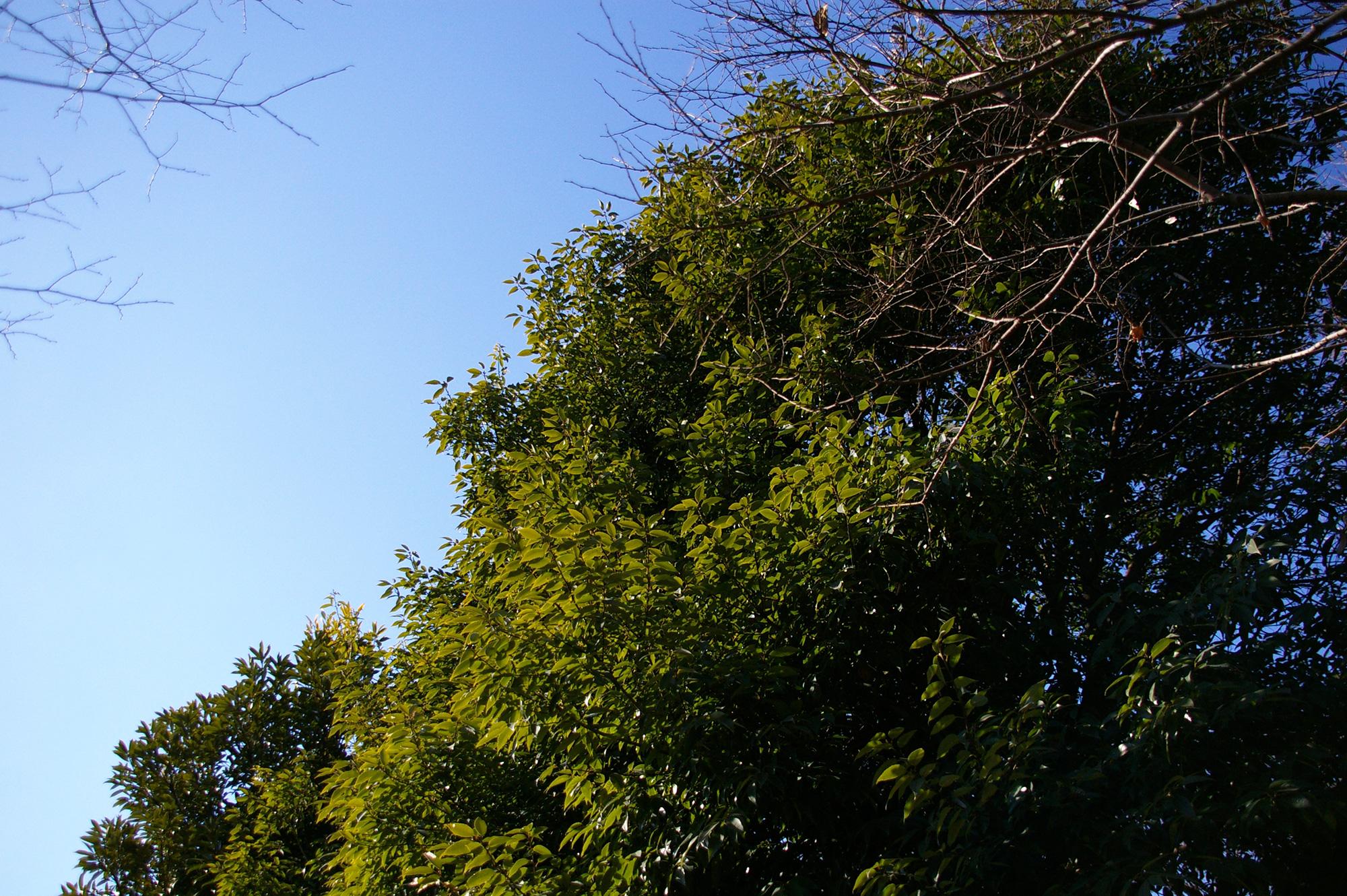 緑と青の無料写真素材