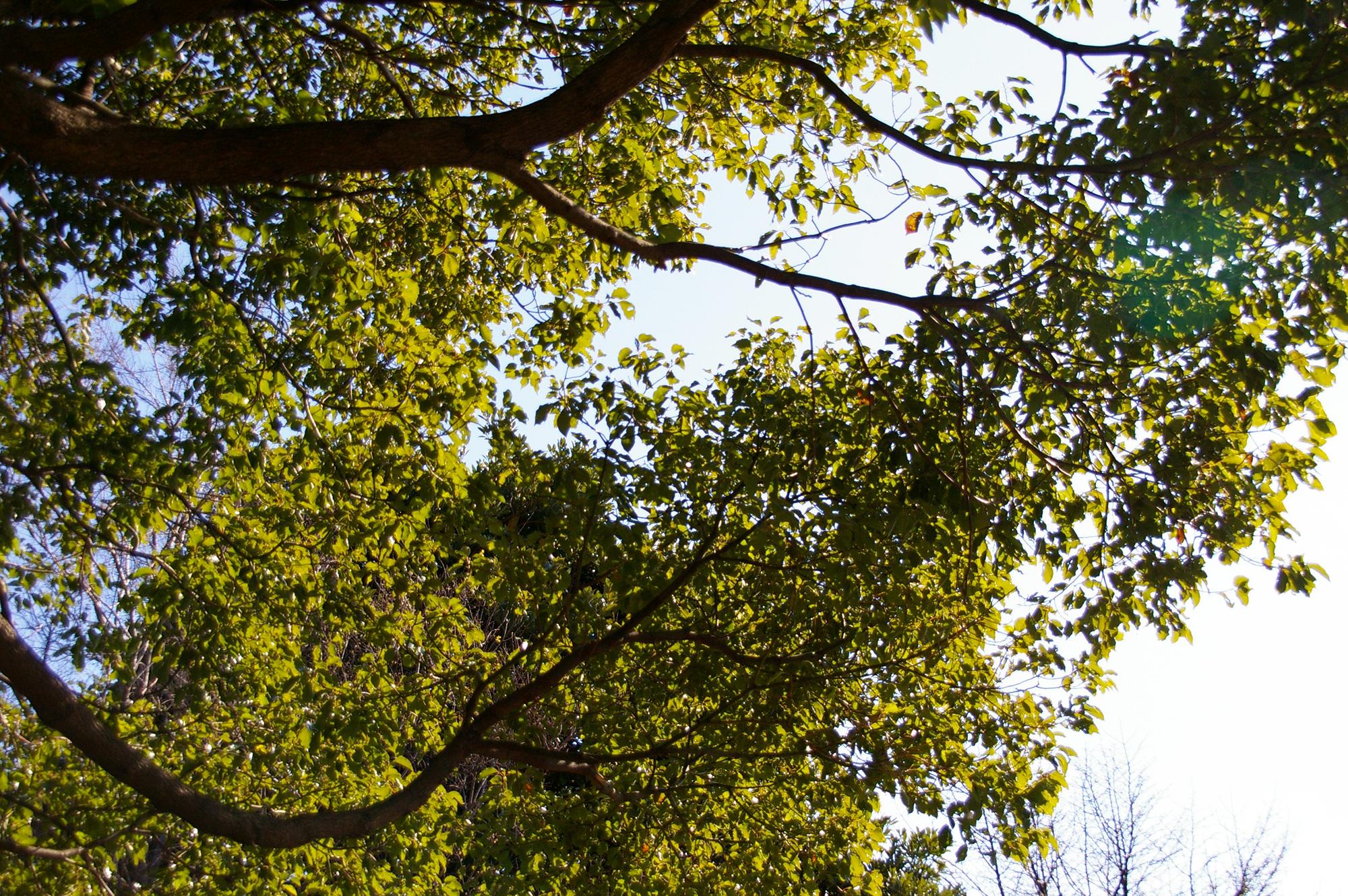 見上げて撮影した木々の枝の写真素材