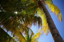 椰子の木と太陽のフリー写真素材