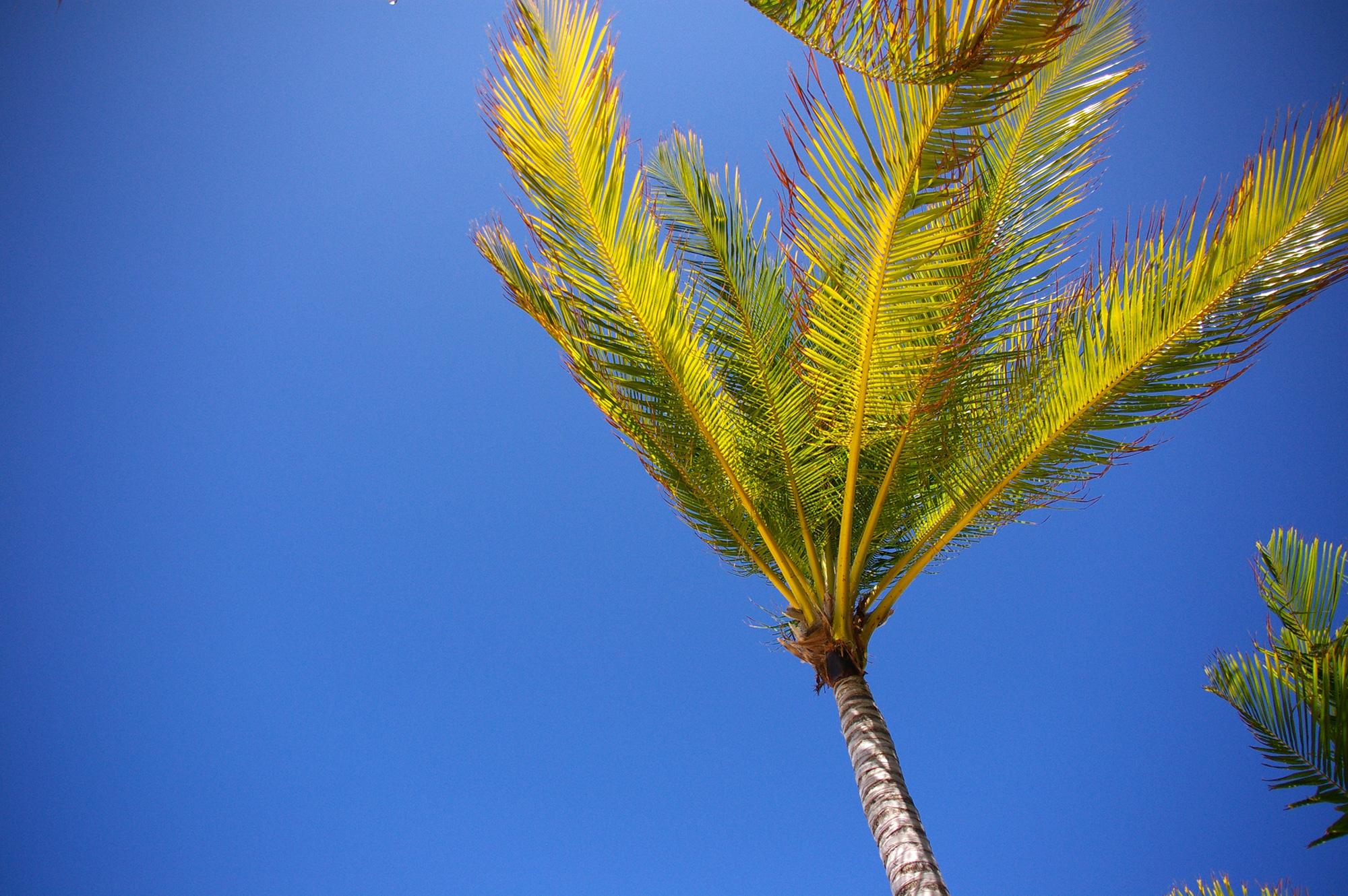 風に吹かれる椰子のフリー写真素材