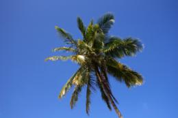 南国イメージのフリー写真素材