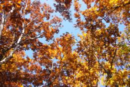 紅葉した森