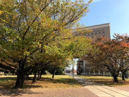 ナビオス横浜の前の公園