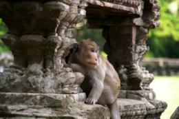 アンコール遺跡にいた猿