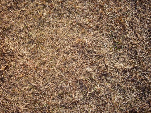 枯れ草のテクスチャ