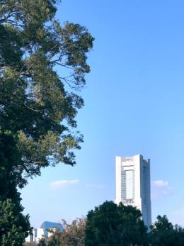 ランドマークタワーと木々