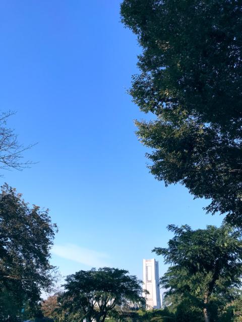 枝の合間のランドマークタワー