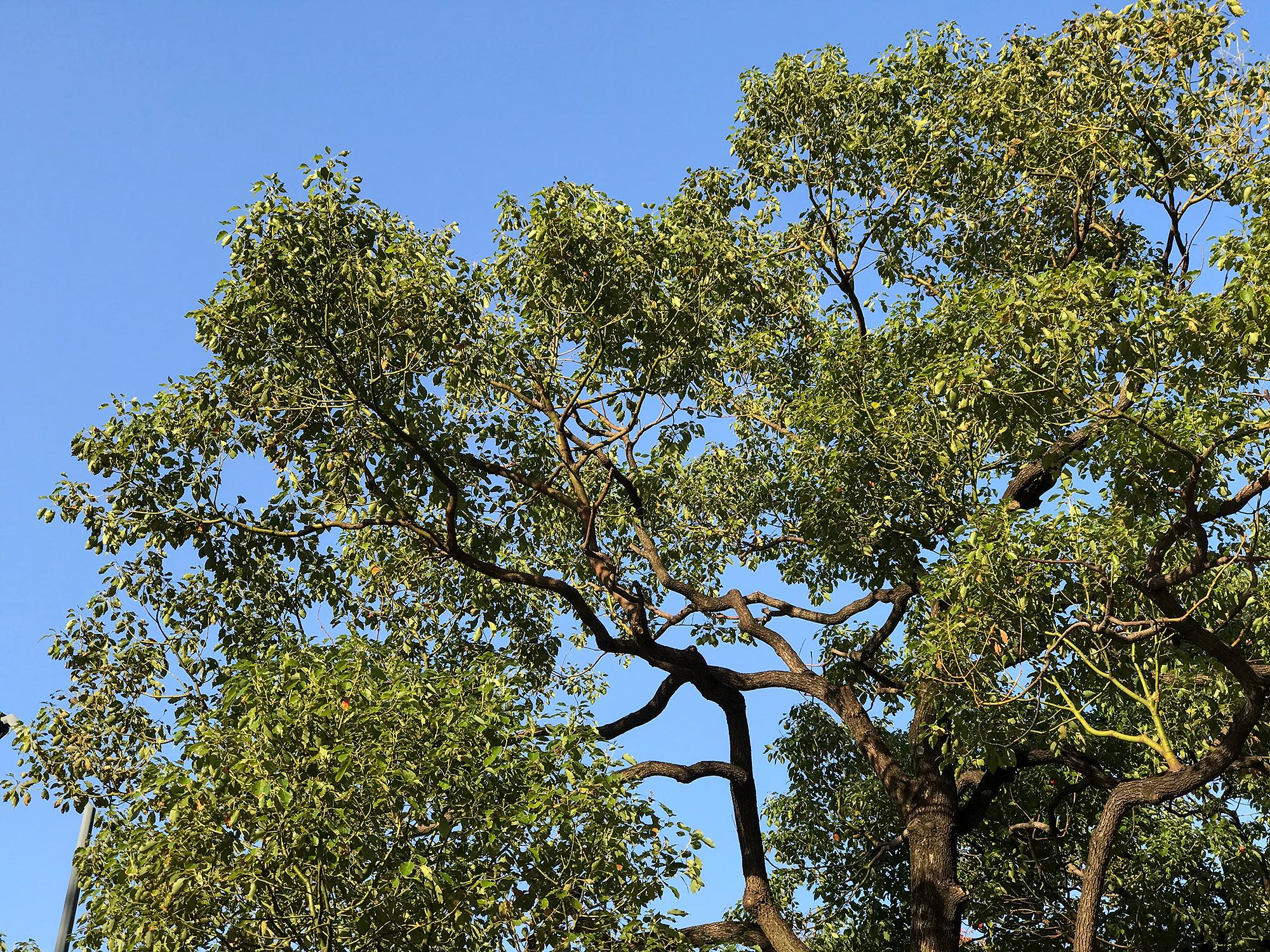 街路樹のフリーの画像素材