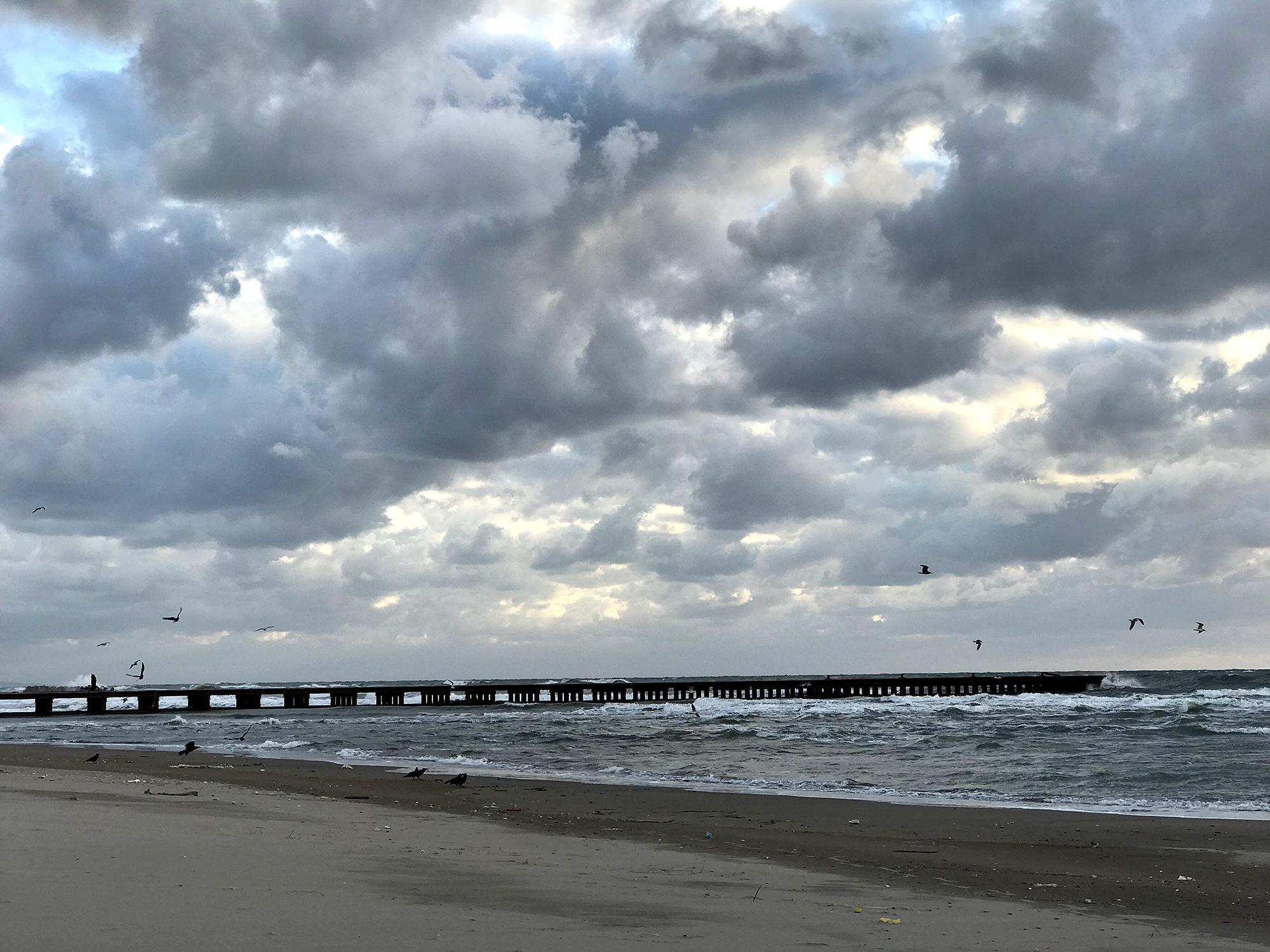 海とカラスの無料写真素材