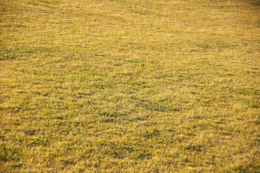 草原の写真の無料素材