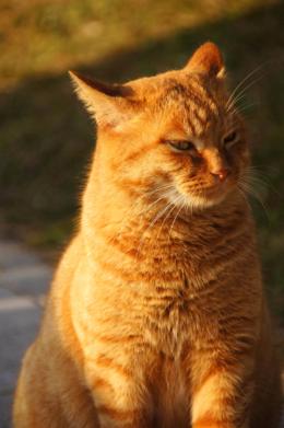 猫のフリー写真素材