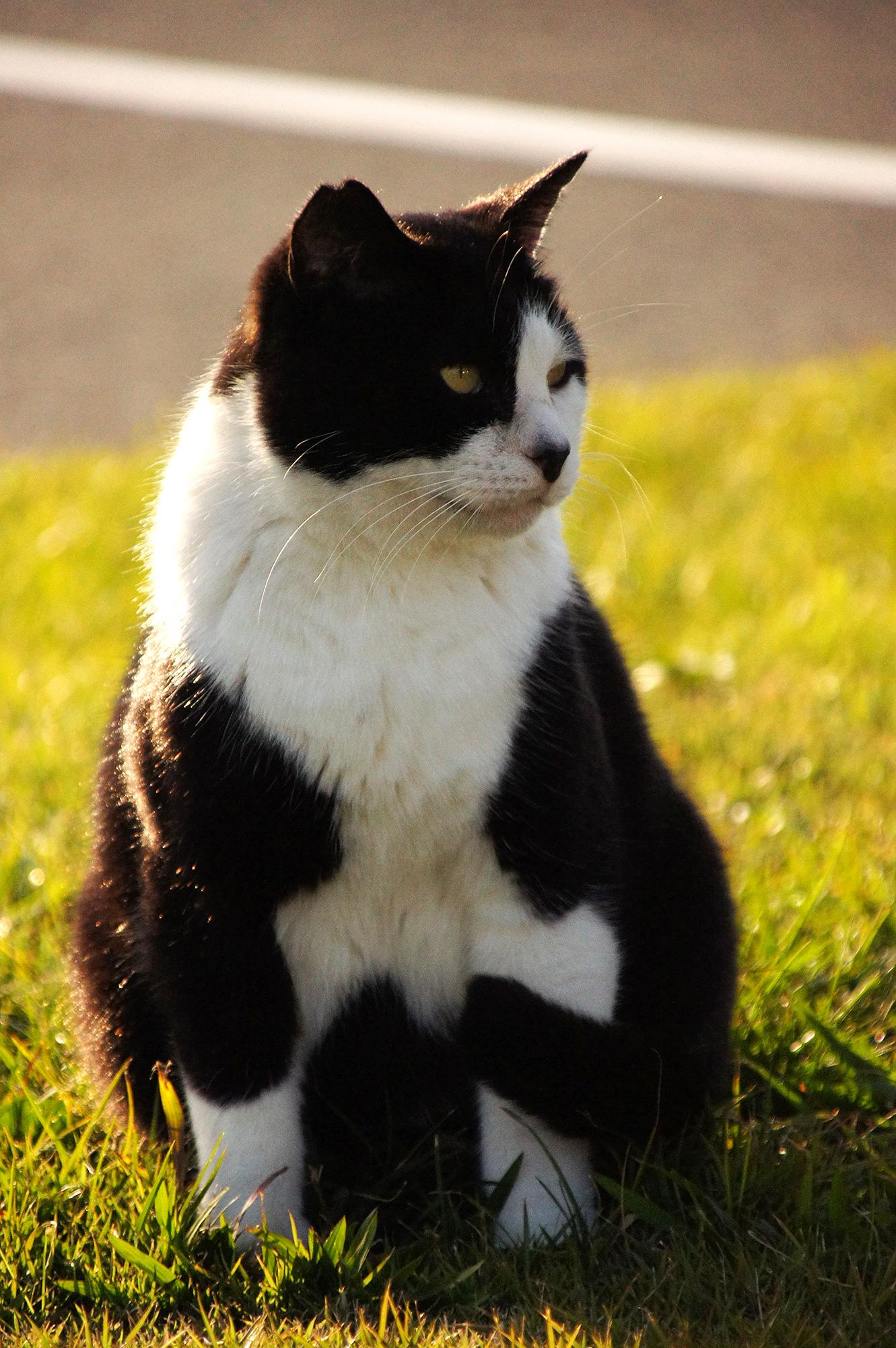 ネコのフリー写真素材