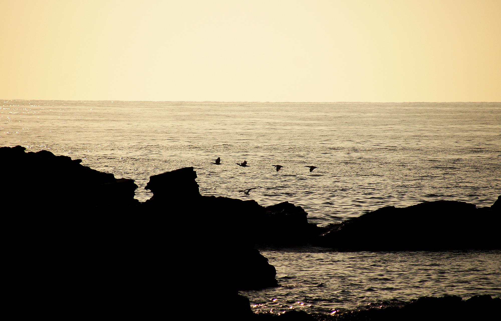 渡り鳥のフリー写真素材
