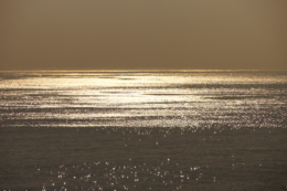 黄金の海のフリー写真素材
