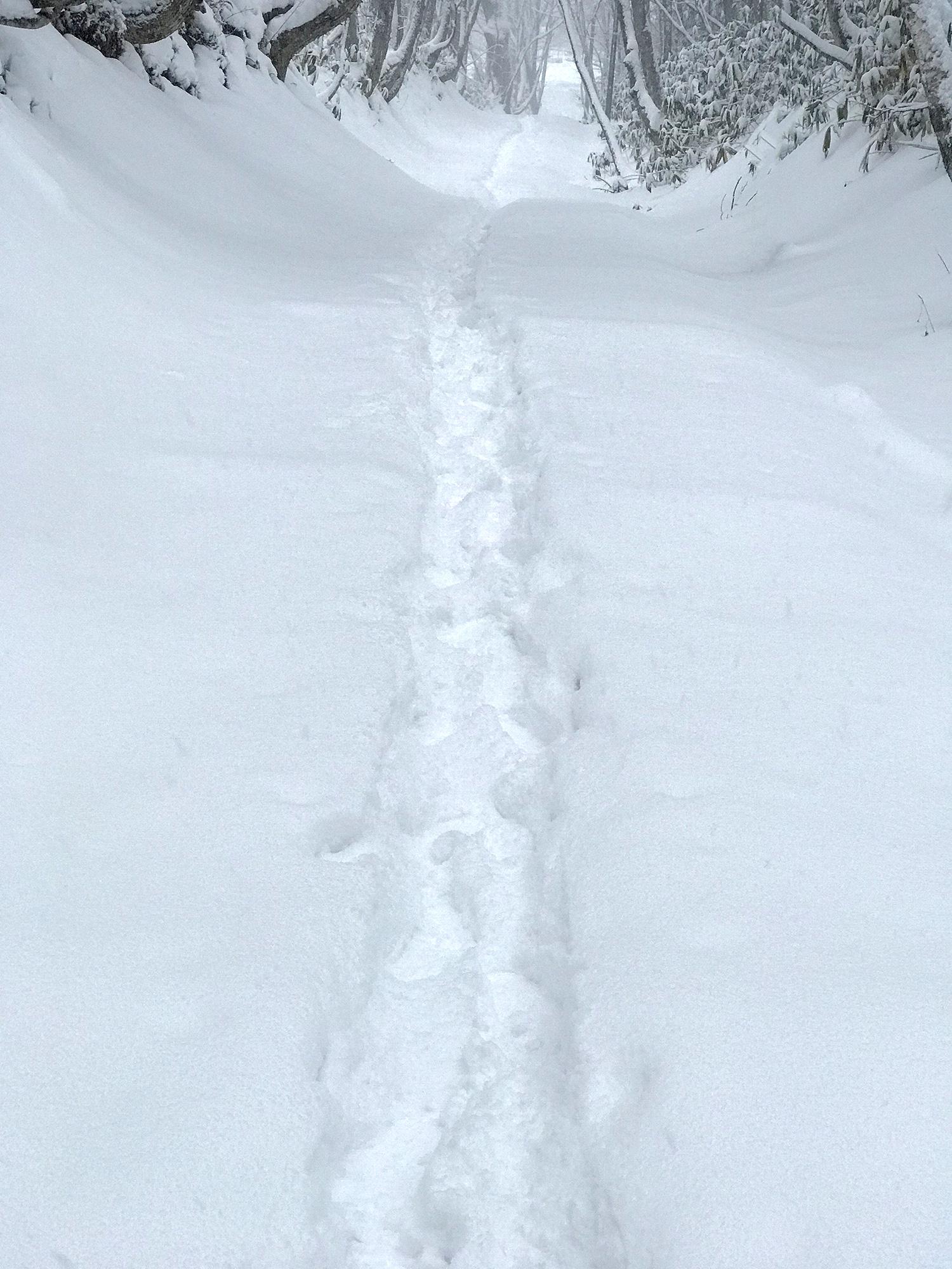雪道の足跡のフリー写真素材