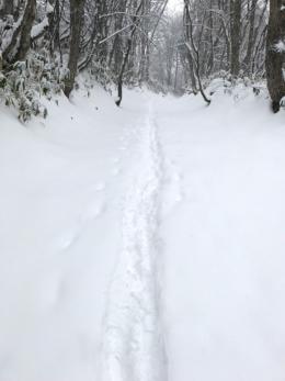 足跡の残る雪道のフリー写真素材