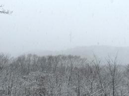 雪降る森の写真の無料画像素材