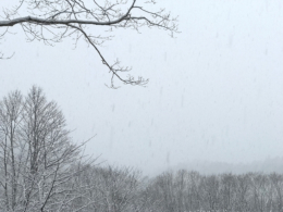 森に降る雪