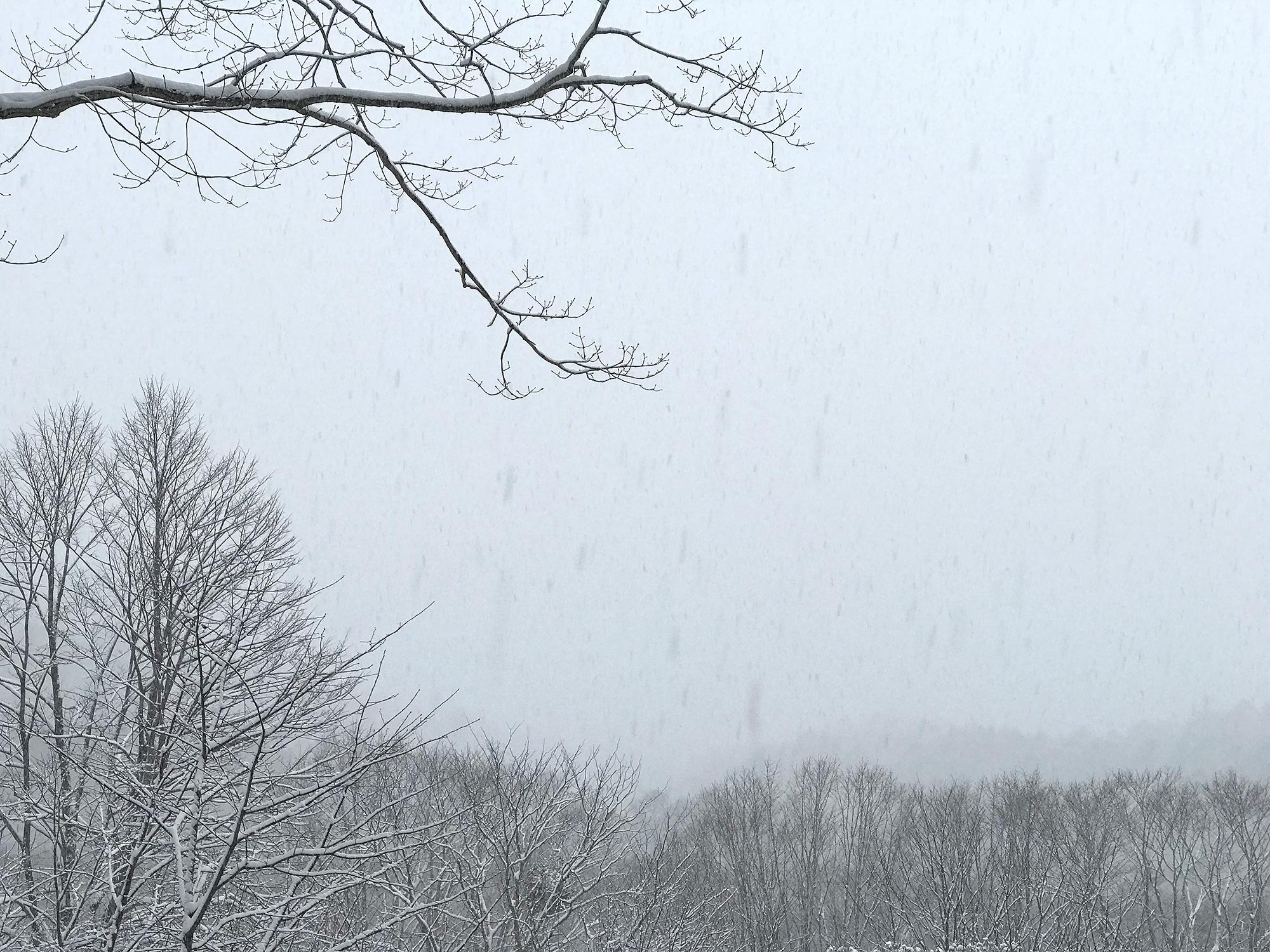 森に降る雪の写真の無料画像素材