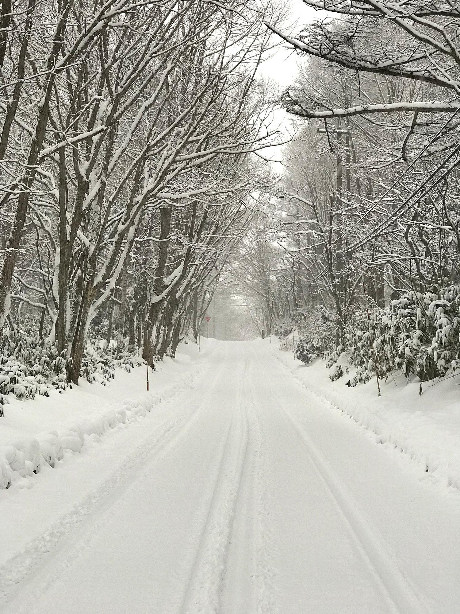 雪道の写真の無料画像素材
