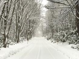 まっすぐな雪道の写真の無料画像素材