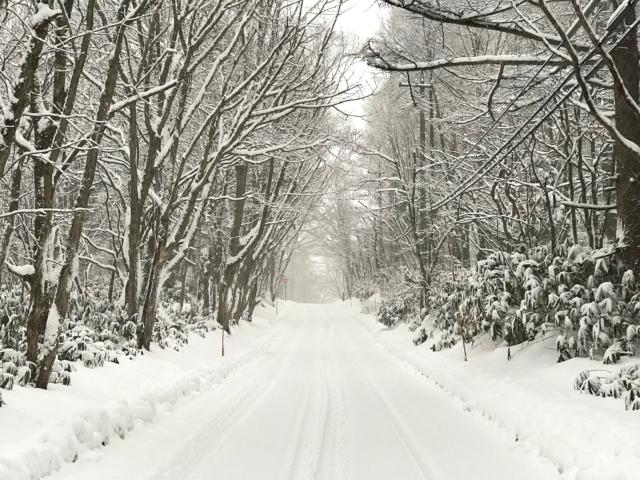 まっすぐな雪道