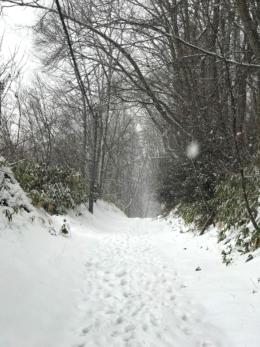 雪が降っている道